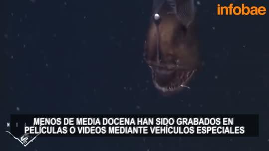 Revelan el primer video del pez más terrorífico del fondo del mar