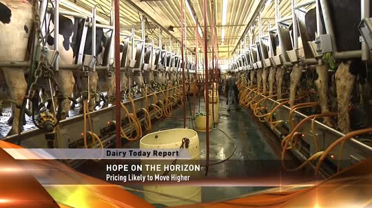 Dairy Industry News Update for Nov. 24,