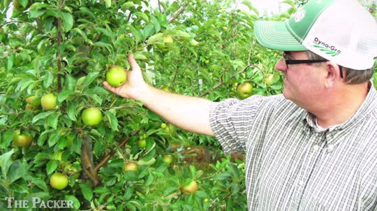 Michigan apple industry comes roaring back