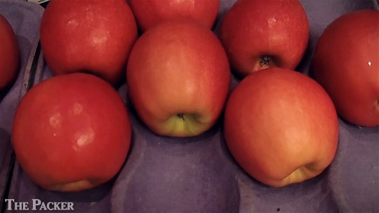 New Washington-bred apple variety hits the market