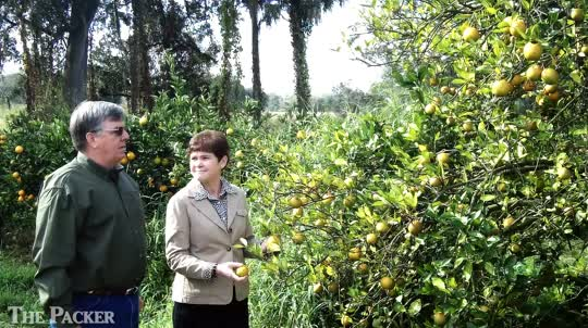 USDA official sees citrus greening in Florida visit
