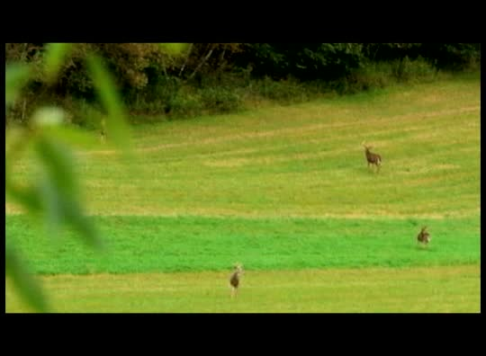 GameKeeper Tip: Pressuring Food Plots