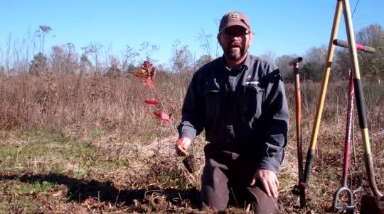 Planting a Rapid Mast Seedling