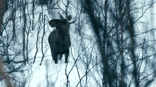 The Moose Detective