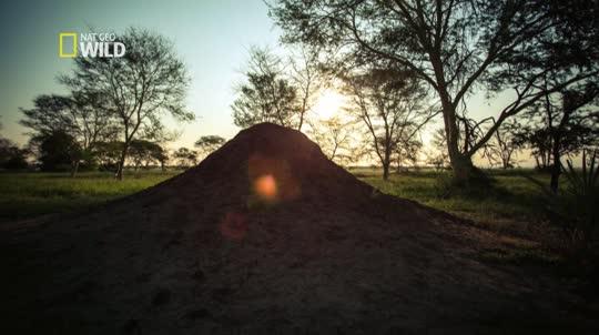 Africa's Wild Kingdom Reborn