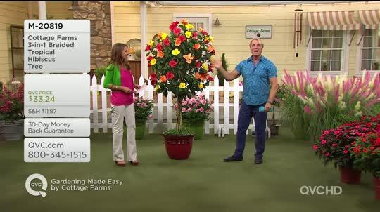 100+ Tropical Hibiscus Braided Tree – yasminroohi